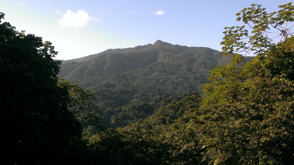 View of the HIgest Point at El Yunque National Forest - Puerto Rico
